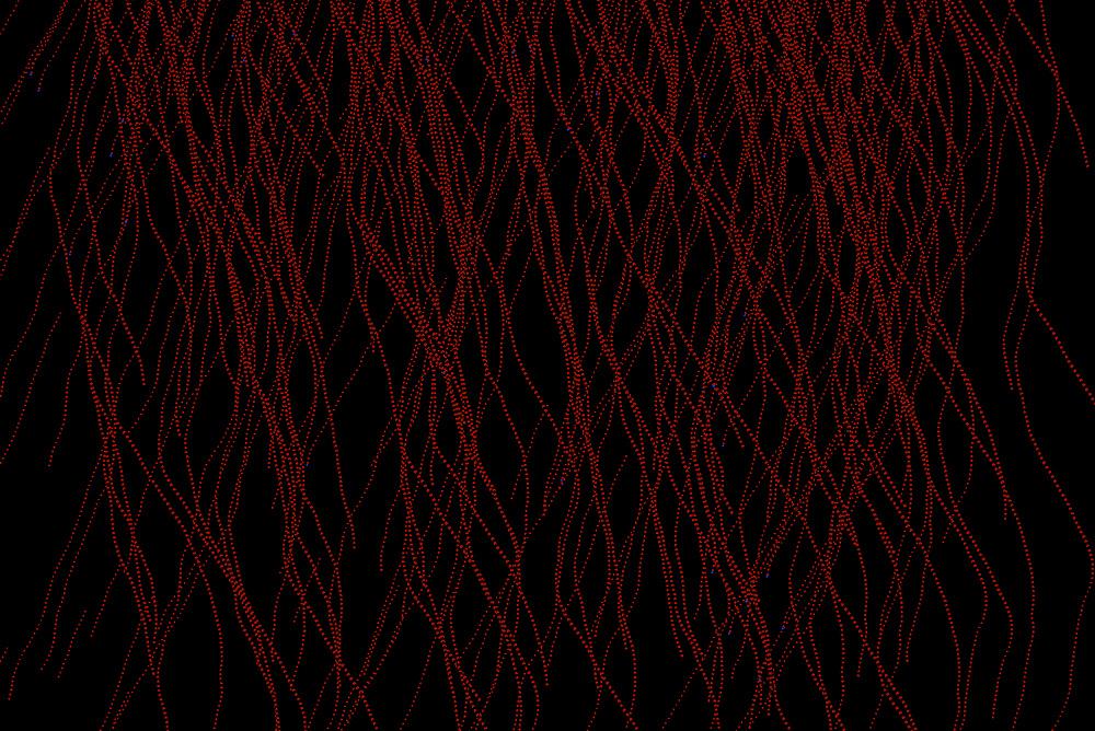 synapsys11